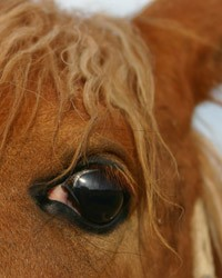 Judge grants injunction against New Mexico horse plant