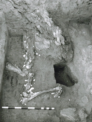 Donkey burial exhibiting remains of cranium and forelimbs.