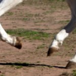 Bolting horses - options for riders