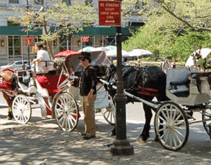 Carriage horses in New York