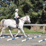 Spotlight on management of riding-school horses