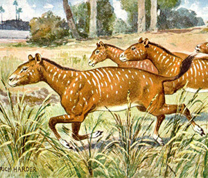 Mesohippus was an ancestor of the horse that lived about 30-40 million years ago.