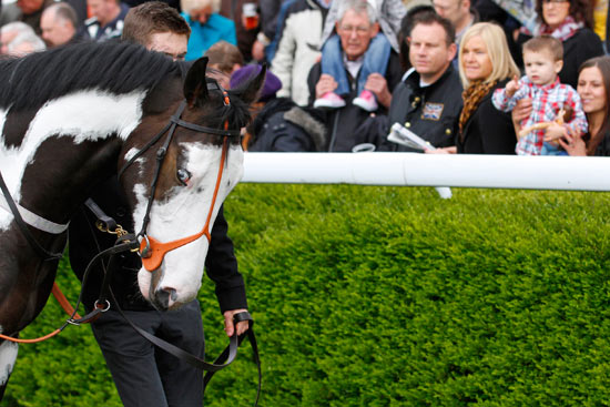 A young racegoer points to the colourful horse in the parade ring.