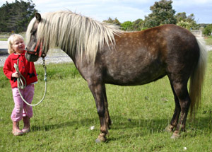 A study has found that overweight horses and ponies were about three times more likely to misbehave.