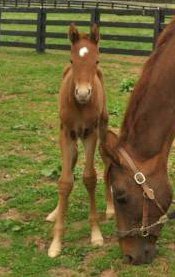 The first foal of Gemini, the clone of showjumper Gem Twist.