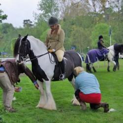 Radical reforms for horse groom apprenticeships in UK