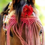 A Marwari horse in his traditional 'dancing' attire.