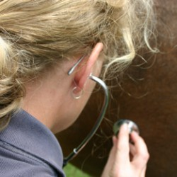 Researchers probe horse owners' knowledge of colic