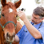 Every death from hendra preventable – Aussie vets