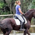 Former Kiwi horses to take Aust riders to Paralympics
