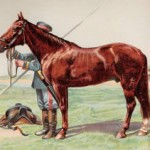 The eight-year old gelding Roubine, Don horse of the cavalry of His Majesty The Emperor of Russia.