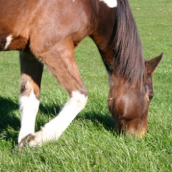 Quarter horse body can refuse to register clones under appeal court ruling