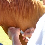 Caution urged over compounded drugs in horses