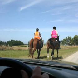 Broken coat colours a safety bonus for road-going horses – study