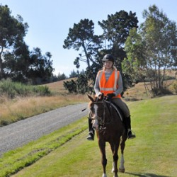 Equine safety experts put facts on the line