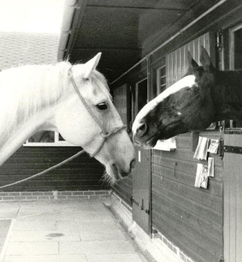 Sefton and Echo