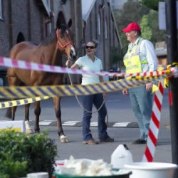 Canada to develop new equine biosecurity standards