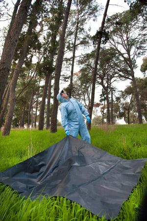 El virus de murciélagos de Nueva relacionado con Hendra mortal descubierto Cedar_7664