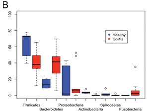 Overall percentages of bacterial populations at the phylum level (Fig. A) and intra-phylum variation (Fig. B) present in feces of healthy horses and horses affected by colitis.