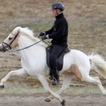 Single gene mutation behind specialist gaits in horses