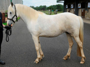 The same pony after receiving care.