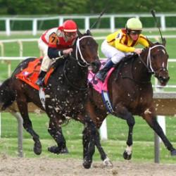 Aust introduces retirement declaration for racehorses