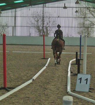 A SRT data collection day in progress, with a horse and rider being tested with biomechanical video analysis.