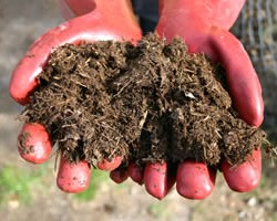 Crop yields in study boosted by use of composted horse dung