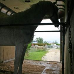 New study to explore horse transportation