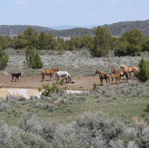 Wild horses in the Buckhorn area.