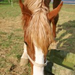 Natural sources of vitamin and minerals for horses