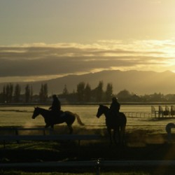 NZ racecourses get $600K for development projects