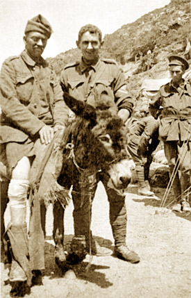 John Simpson Kirkpatrick (centre) with his donkey Duffy carrying a wounded soldier at Gallipoli.