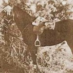 Lest we forget: New Zealand's horses at war