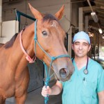 Alonso Guedes, an assistant professor of veterinary medicine, rescued Hulahalla, this four-year-old thoroughbred mare, from the brink of death by administering an experimental anti-inflammatory drug to treat laminitis, an agonizingly painful foot disease.