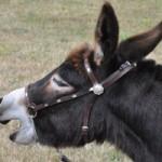 Farmer arrested for naming donkey after Egyptian general