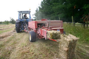 The cost of having hay baled varies throughout the country, but expect to pay anything from $2 to $3.