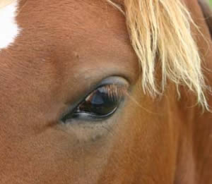 Horses have dichromic vision, meaning they have a fundamentally different view of the world to people.