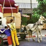 Israel bans horse-drawn carts from its cities