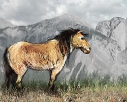 Are North America's wild horses native?