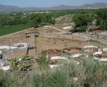 Nineteen horses have died at the Cañon City, Colorado, facility of the BLM's Wild Horse Inmate Program