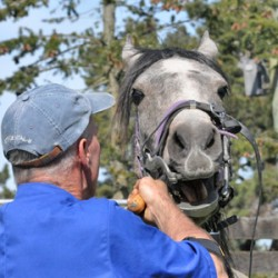 Need for rasping sharp points on horse teeth examined in study