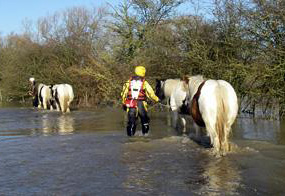 Horses are led to safety after being trapped in a flooded field.