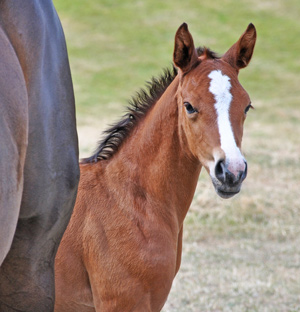 foal-embryo