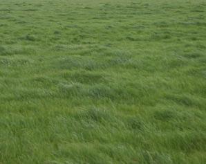 grass298x238