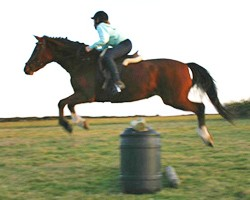 Horses and risk to be explored in special issue of journal