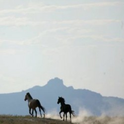 Deal close over wild horses on Navajo land