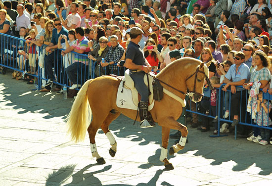 A striking Spanish horse prances into the Square with his rider.