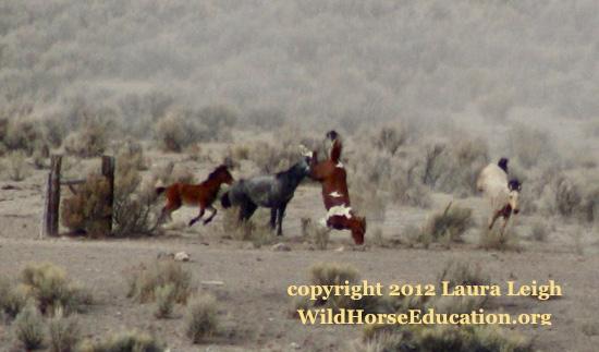 wild-horses-laura-leigh