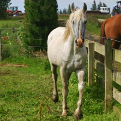 Does electric fencing cause stress in your horse?